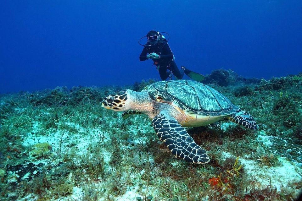 afrique, soudan, tortue, imbriquée, nageur, ocean