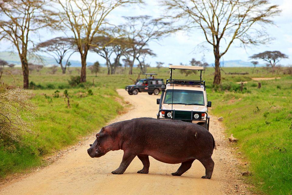 afrique, sierra, leone, hippopotame, safari, route