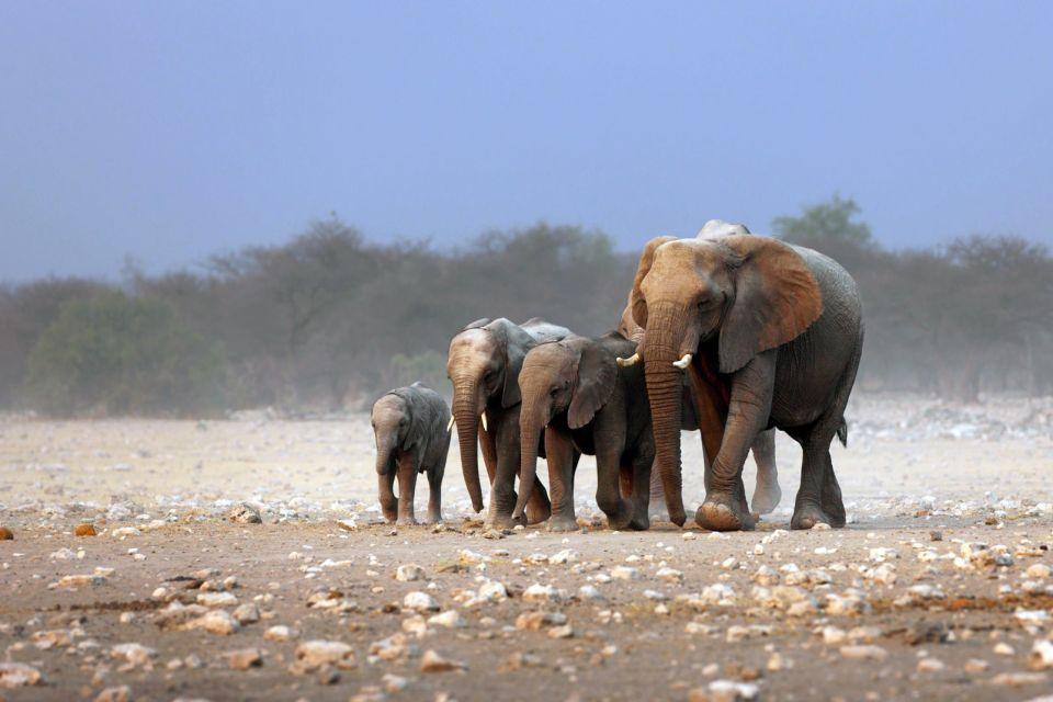 afrique, somalie, elephant, plaine, troupeau; mammifère