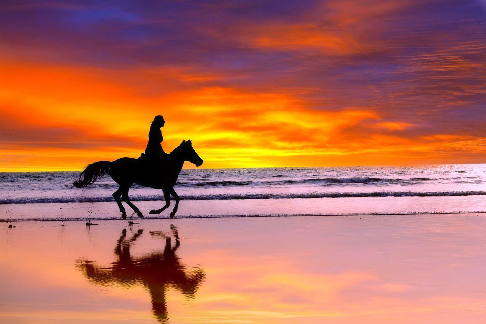 Amerique, sud, Salvador, coucher, soleil, plage, cheval, mammifère