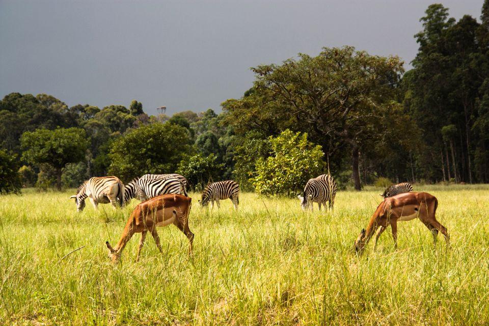 Swaziland,