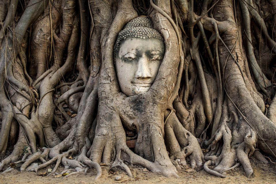 Thaïlande, asie, temple, divinité, Bouddha, Wat Mahathat, parc, mahathat, Sukhothai, statue, sculpture, arbre, racine, tête, ayutthaya