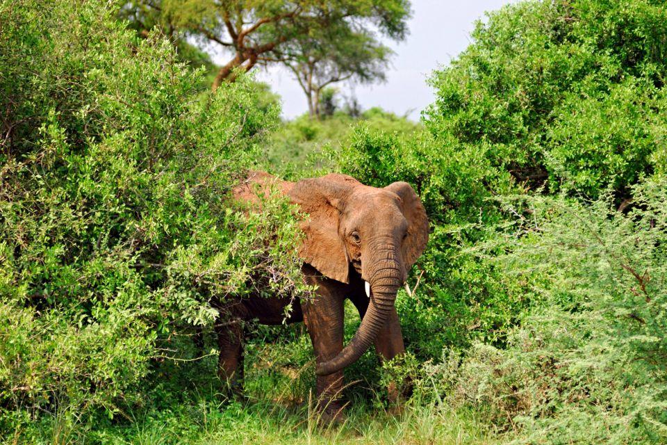 afrique, ouganda, faune, végétation, éléphant; mammifère