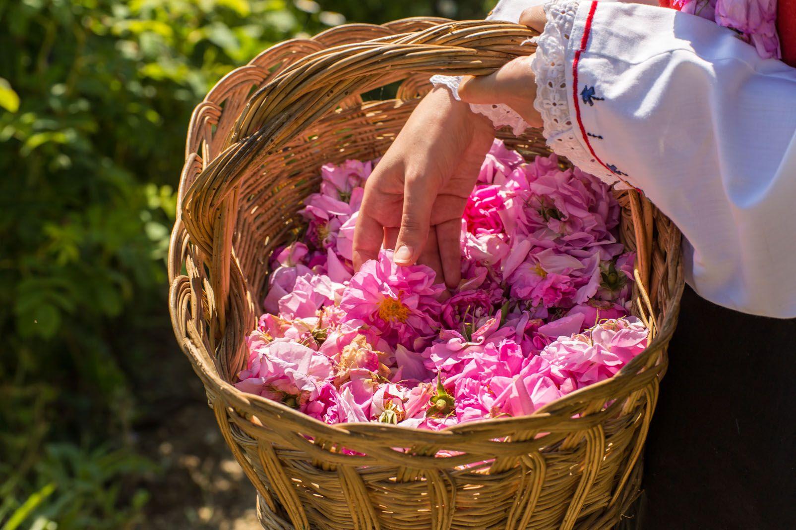 Bulgarie, Les roses bulgares