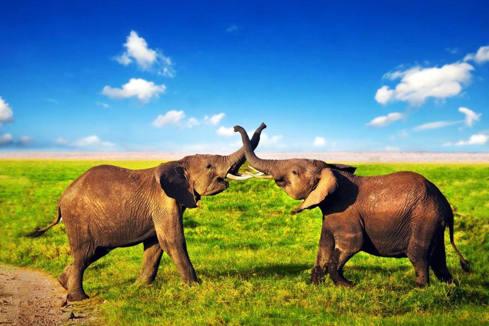 Botswana, afrique, savane, animal, faune, mammifère, pachyderme, éléphant
