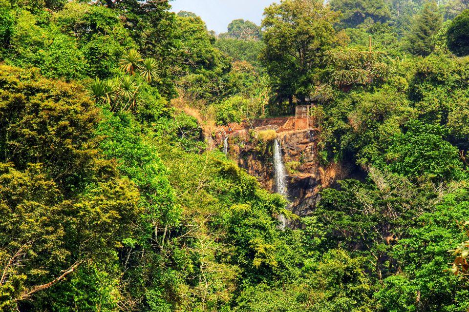 Afrique, cameroun, fongo, tongo, cascade, mamy, wata, fôret, tropicale, végétation