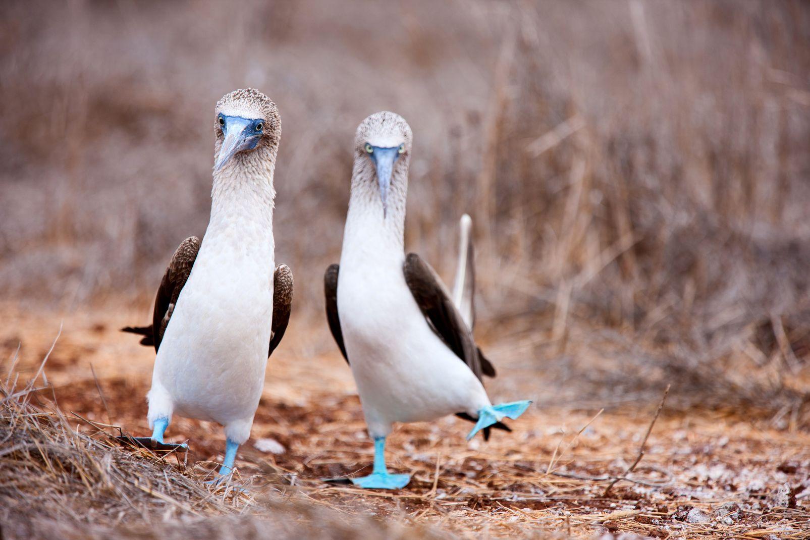 Ecuador and Galapagos Islands