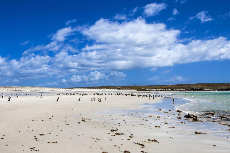 Amérique, Sud, Malouines, îles, manchot: ocean antarctique, animal, oiseau, faune, Saunders, Falkland, île, pingouin
