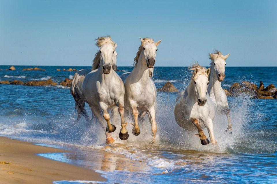 Europe, France, mer; mediterranée; plage; cheval; provence; méditerranée; mammifère;