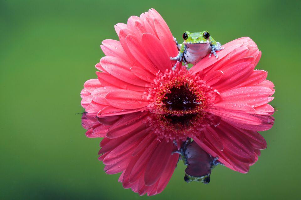 amerique, sud, guyane, faune, grenouille, animal, fleur, flore