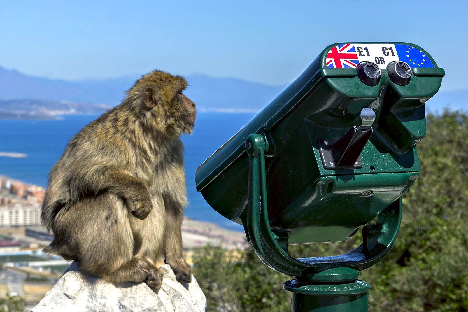 upper, rock, nature, reserve, rocher, singe, telescope, gibraltar, europe