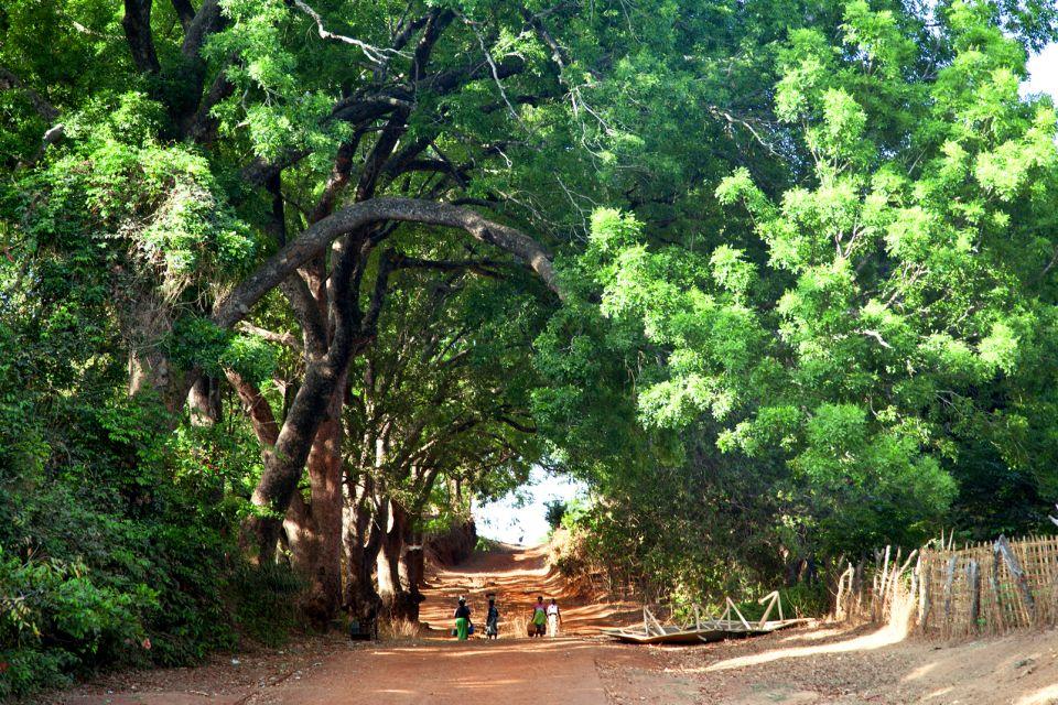afrique, guinee, bissau, route, arbre, gens, rurale