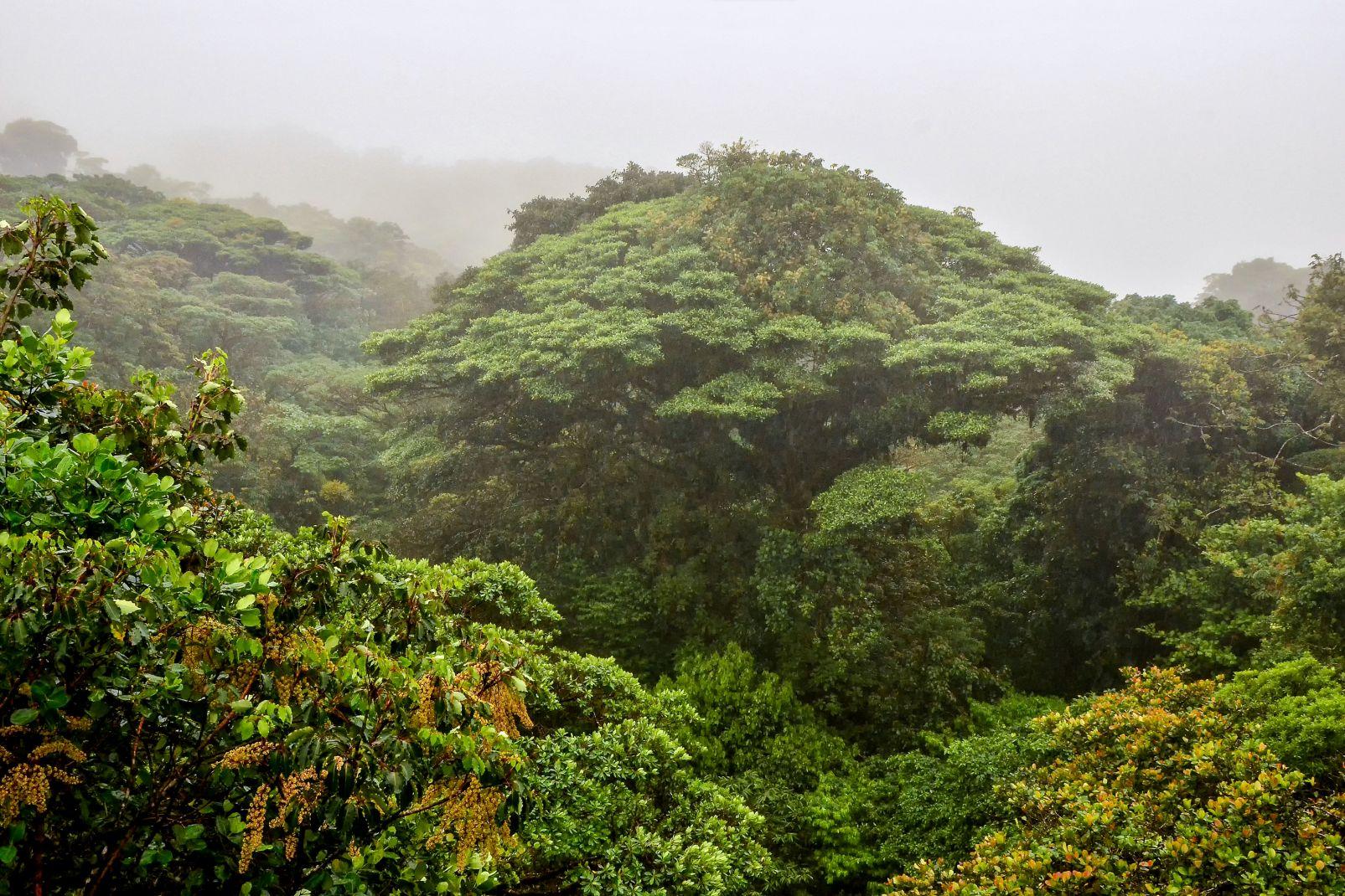 Amérique, guyana, sud, forêt, jungle