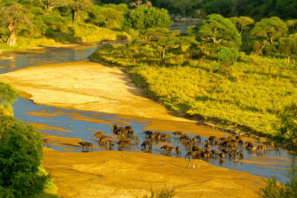 Tanzanie, Tanzanie