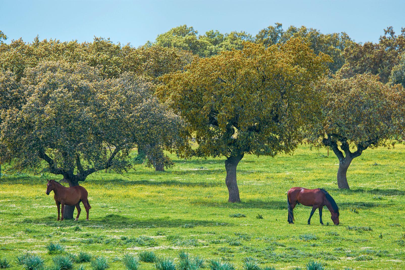 Extremadura, Spanien