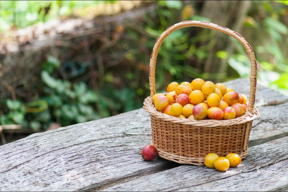 France, europe, lorraine, mirabelle, prune, fruit