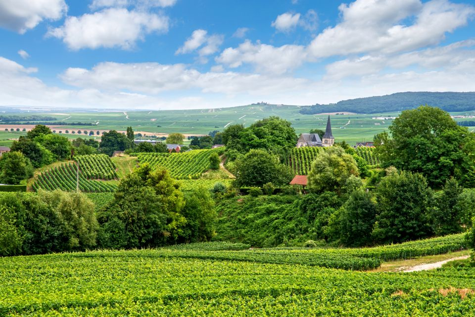 vigne, france, europe, champagne, ardenne