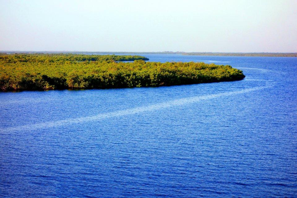 Afrique, Sénégal, Sine Saloum, delta, mangrove, forêt, mer