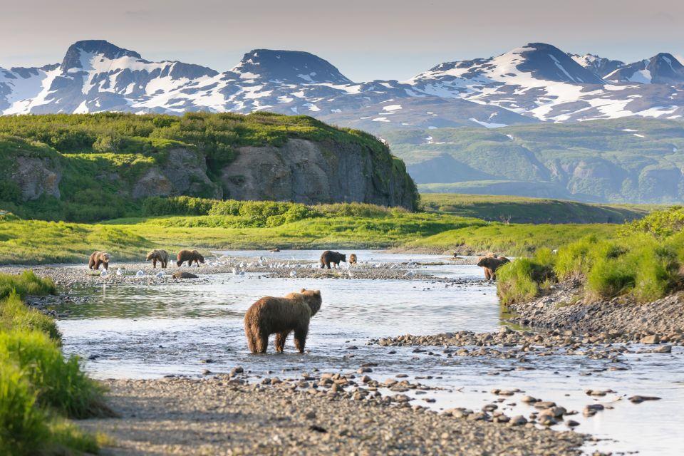 Alaska, Etats-Unis, amérique, USA, ours, mammifère, faune, animal