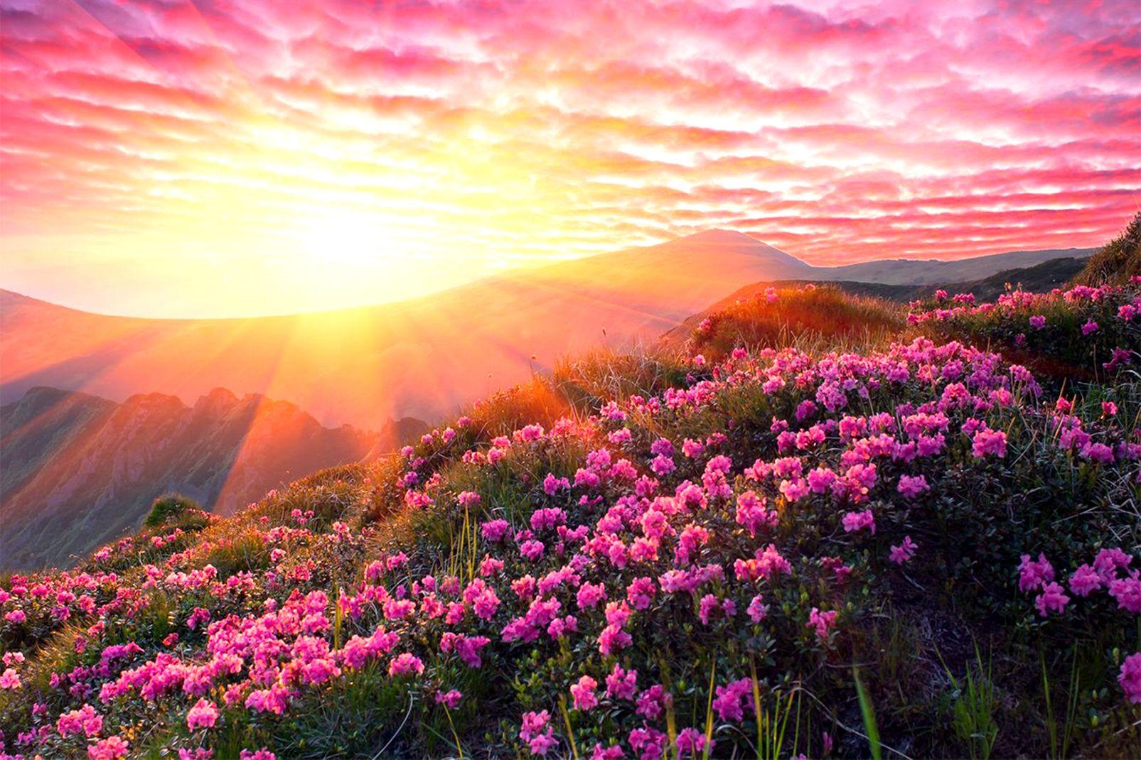 amerique, canada, ouest, nord, rhododendron, montagne, territoires du nord-ouest