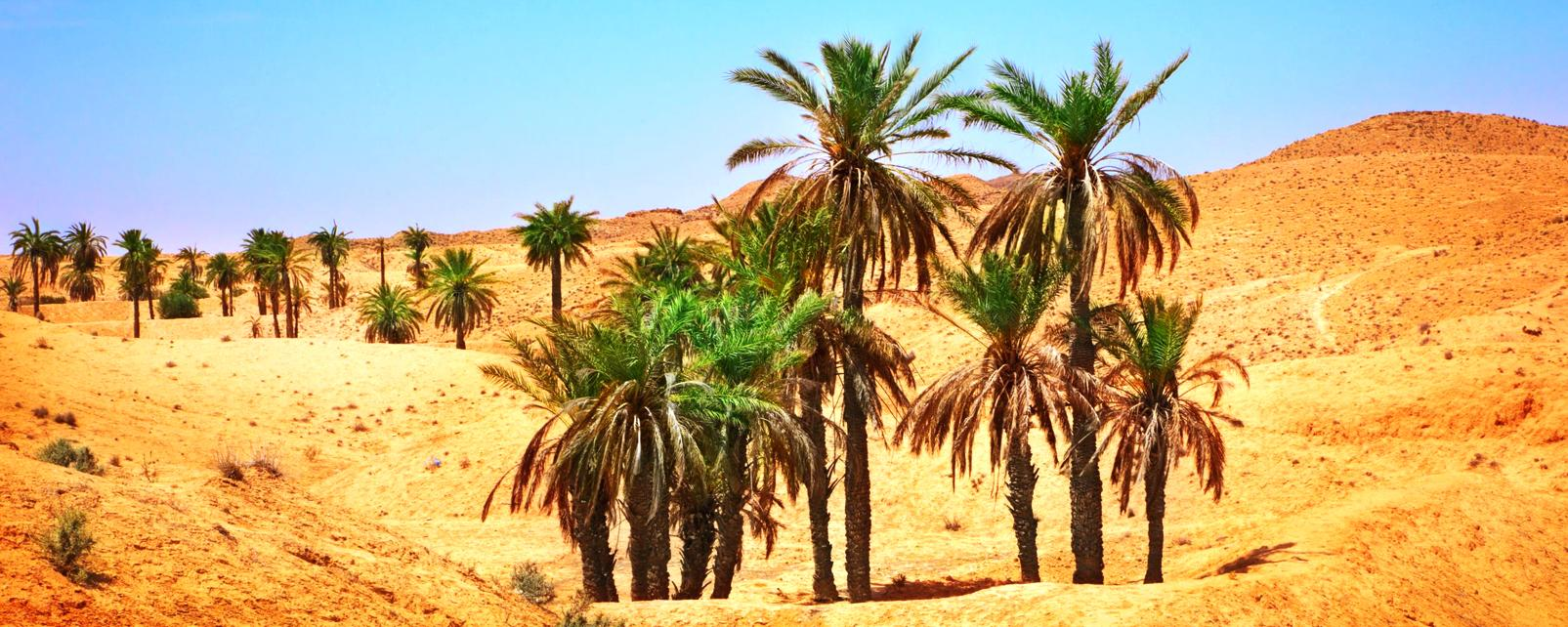 Afrique, Mauritanie, Sahara, désert, palmier, dune, sable,