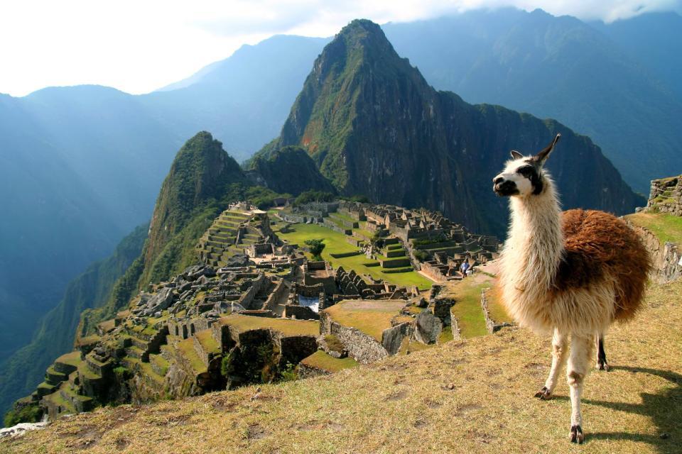 Amérique, Amérique du Sud, Pérou, Machu Picchu, cité inca, lama, llama