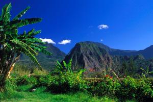 Océan Indien, Réunion, Cirque de Salazie, Cirque, Salazie, île, montagne, arbre,