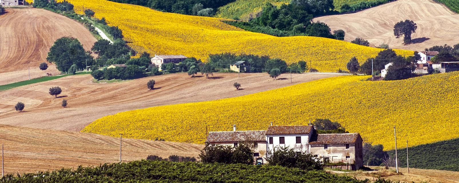 Europe, Italie, Marches, village, champ, agriculture, maison, arbre, plaine,