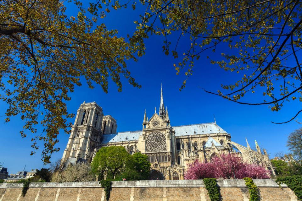 Europe, France, Ile de France, Paris, Notre Dame de Paris, cathédrale, arbre, religion, ville,
