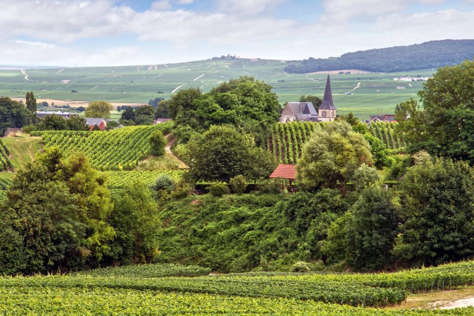 Europe, France, Champagne-Ardenne, Reims, vignoble, village, arbre, église, maison, campagne,