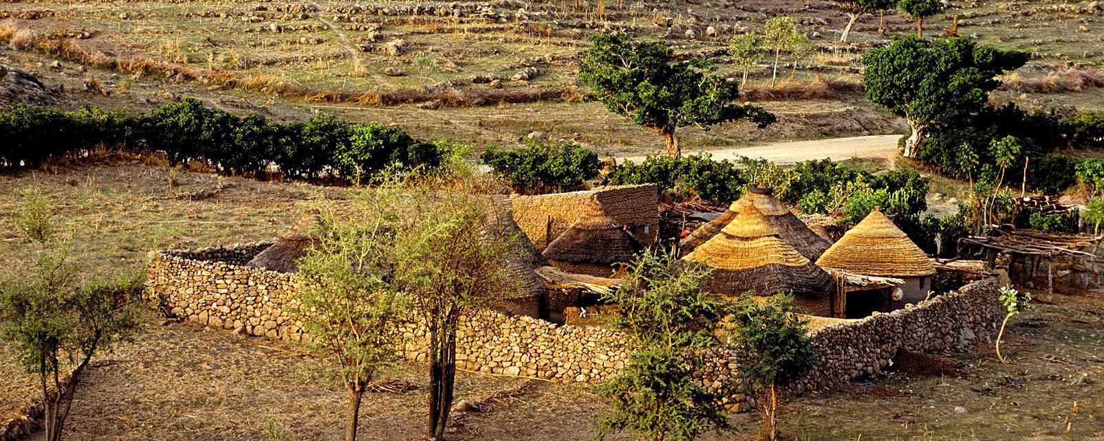 Afrique, Cameroun, village, arbre, végetation, hutte,