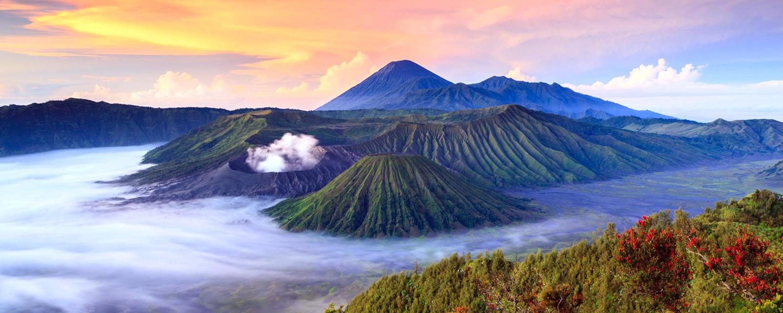 Asie, Indonésie, Java, volcan, Bromo, arbre,