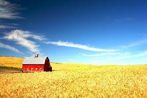 Amérique, Amérique du Nord, Le Midwest, etats-unis, USA, amérique, amérique du nord, agriculture, blé, ferme,