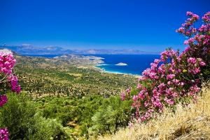Europe, Grèce, Crète, mer, montagne, plaine, fleur, arbre,