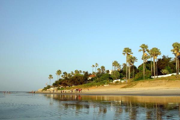 Afrique, Gambie, plage, baignade, promenade, arbre,