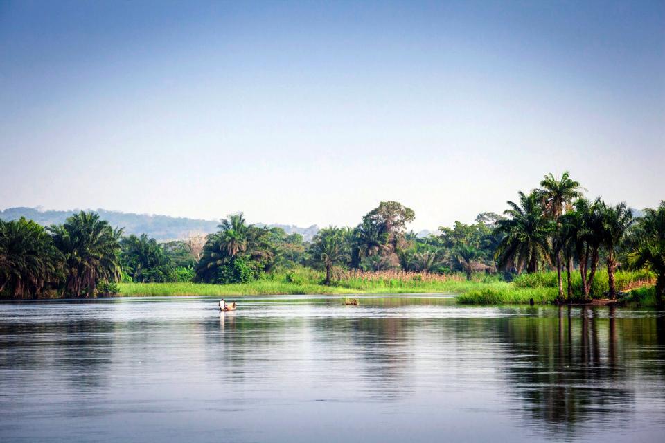 Afrique, Ghana, fleuve, Volta, pirogue, arbre,