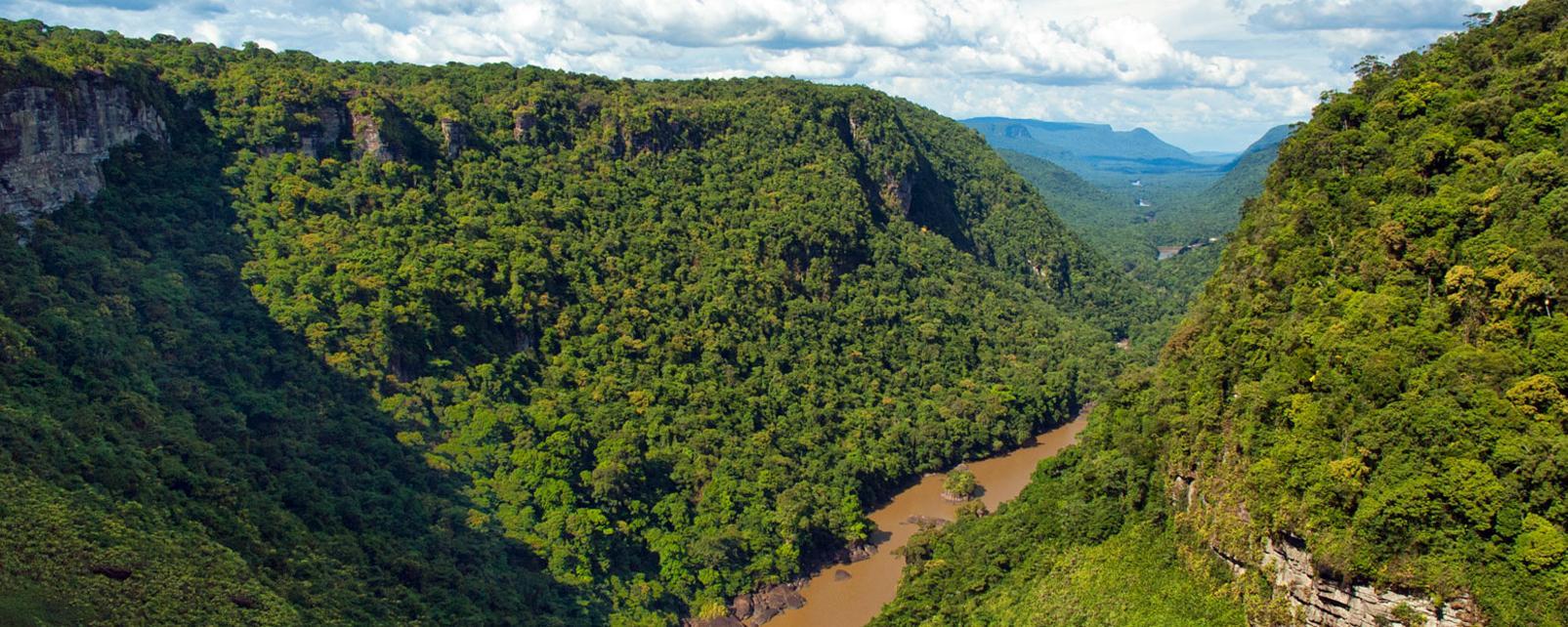 Amérique, Amérique du Sud, Guyana, rivière, forêt, arbre,
