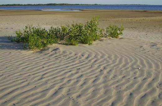 2ème jour: L'île de Saarema