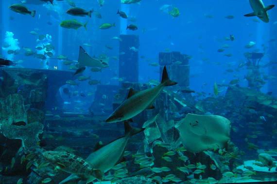 Under water above ground