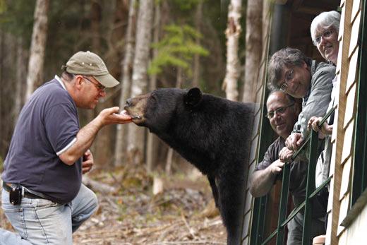La observación de osos