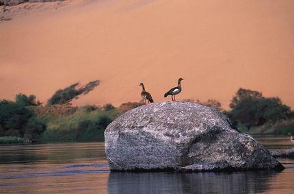 La reserva natural de Asuán.