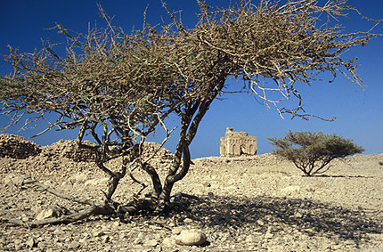 Qalhat, Marco Polo's port of call