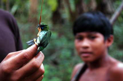 La caza de aves