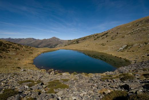 Descubre la Flora de los Pirineos