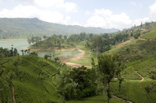 Paseo en bici por las plantaciones de té