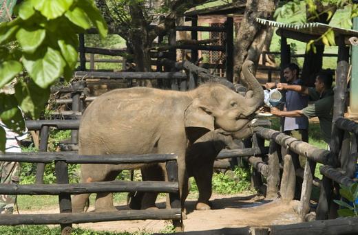 La isla del elefante