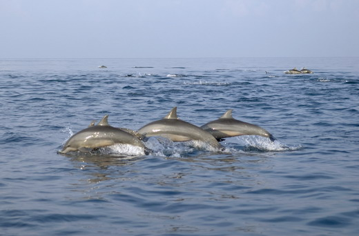 Ballenas y delfines en la costa