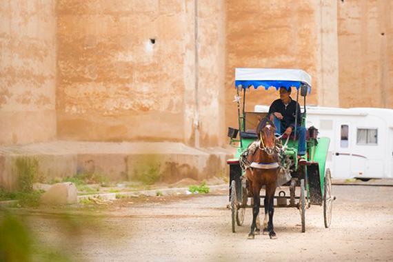 Agadir : Balades en cal�che - Maroc