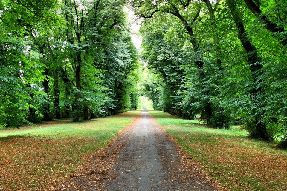 Située à 50 kilomètres de Paris, à mi-chemin entre Versailles et Chartres, Rambouillet est une ville qui possède de beaux espaces verts dont la forêt de Rambouillet, de près de 30 000 hectares. En 2000, la ville a reçu le Prix Européen de l'Art de Vivre. Le territoire de la commune, recouvert à 80% d'espaces ruraux essentiellement boisés et de nombreux cours d'eau invitent aux balades bucoliques. L'histoire ...