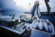 Comme la majorité des villes côtières australiennes, on peut assister à d'incroyables parties de pêche.